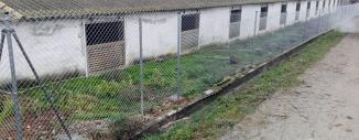 Cercado de Simple Torsión en Granja Porcina en Gurrea de Gallego (Zaragoza)