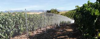 Vallado de Granja Porcina en Nareja (La Rioja) con Malla de Simple Torsión