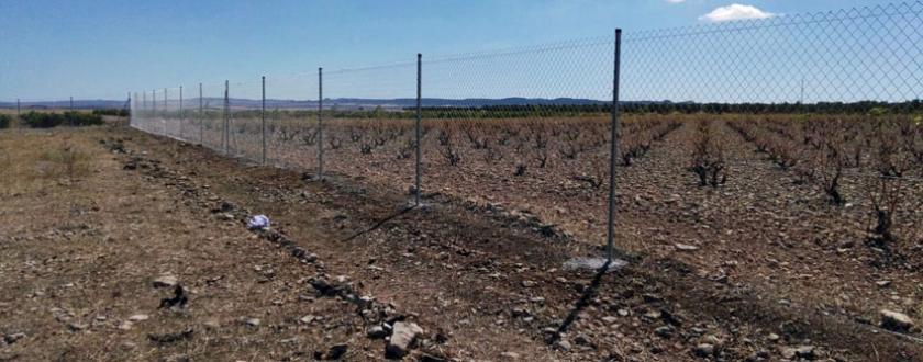 Vallado de Simple Torsión en Granja bovina de Pedrola (Zaragoza)